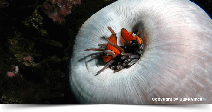 _whitecuttlefish_1425280014-(4)
